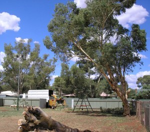 tree-felling-perth