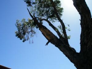 tree-surgery-perth