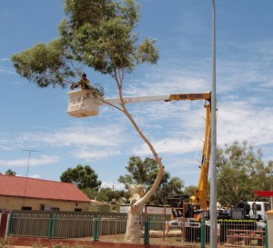 tree-pruning-with-cherry-picker